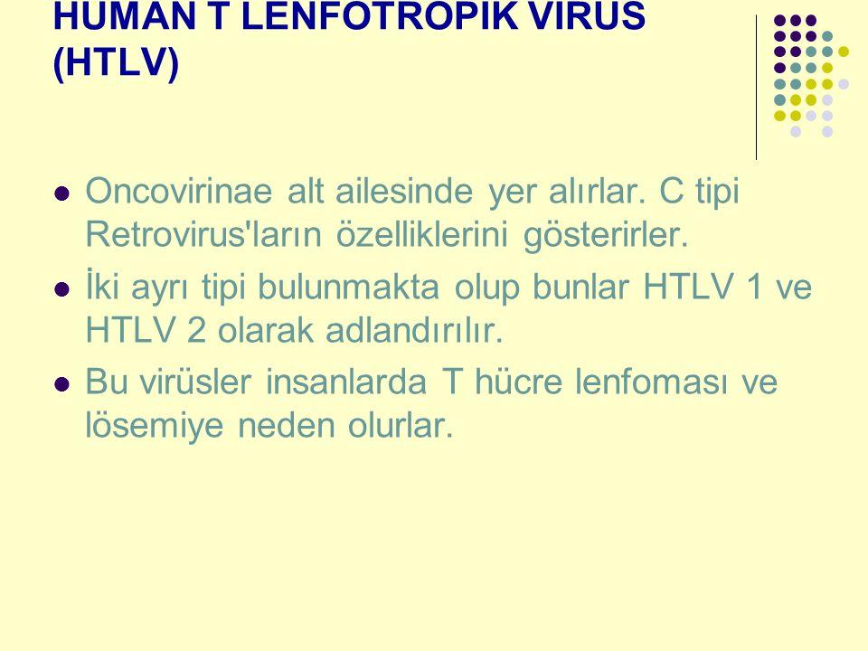 HUMAN T LENFOTROPİK VİRÜS (HTLV) Oncovirinae alt ailesinde yer alırlar. C tipi Retrovirus'ların özelliklerini gösterirler. İki ayrı tipi bulunmakta ol