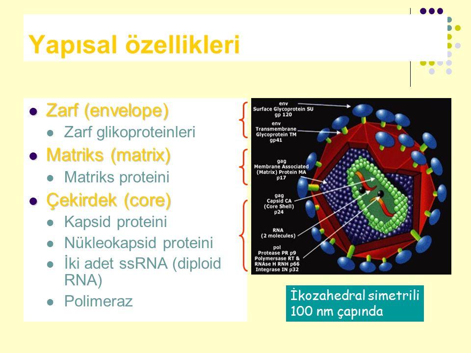 Yapısal özellikleri Zarf (envelope) Zarf (envelope) Zarf glikoproteinleri Matriks (matrix) Matriks (matrix) Matriks proteini Çekirdek (core) Çekirdek