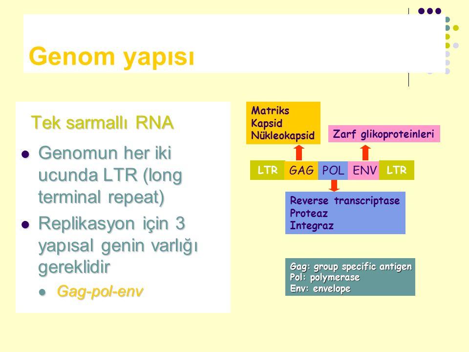 Genom yapısı Tek sarmallı RNA Tek sarmallı RNA Genomun her iki ucunda LTR (long terminal repeat) Genomun her iki ucunda LTR (long terminal repeat) Rep