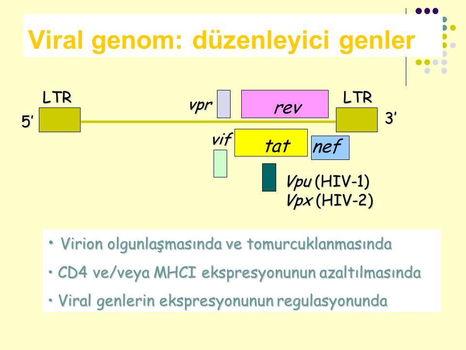 Viral genom: düzenleyici genlerLTRLTRvpr rev nef vif Vpu (HIV-1) Vpx (HIV-2) 5' 3' tat Virion olgunlaşmasında ve tomurcuklanmasında Virion olgunlaşmas