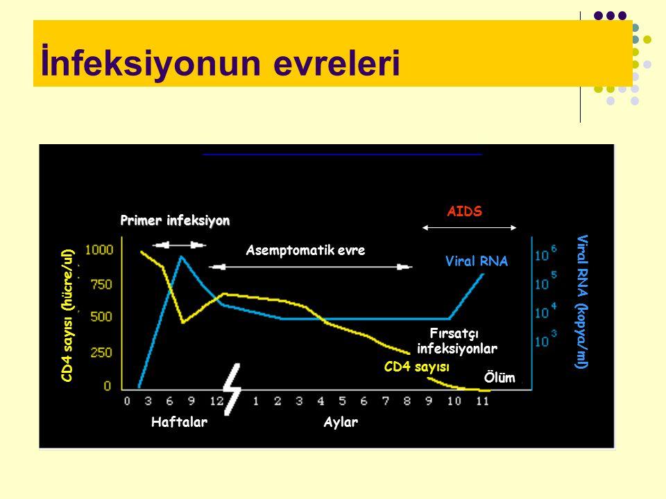 İnfeksiyonun evreleri Primer infeksiyon Asemptomatik evre Fırsatçı infeksiyonlar Ölüm CD4 sayısı HaftalarAylar Viral RNA (kopya/ml) CD4 sayısı (hücre/