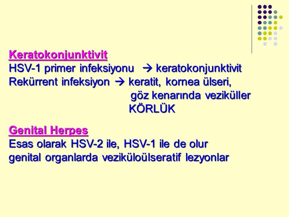 Keratokonjunktivit HSV-1 primer infeksiyonu  keratokonjunktivit Rekürrent infeksiyon  keratit, kornea ülseri, göz kenarında veziküller göz kenarında