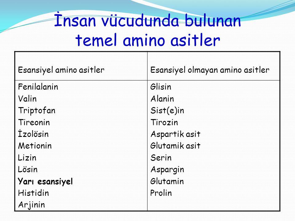 İnsan vücudunda bulunan temel amino asitler Esansiyel amino asitlerEsansiyel olmayan amino asitler Fenilalanin Valin Triptofan Tireonin İzolösin Metio