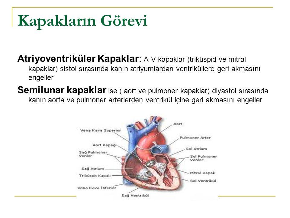 Kalp Seslerinin Kalbin Pompalama ile İlişkisi Ventrikül kasıldığı zaman ilk olarak A-V kapakların kapanması ile oluşan bir ses duyarız.