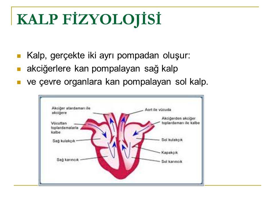 Bunların her biri, bir atriyum ve bir ventrikülden oluşan iki bölmeli bir atom pompasıdır.