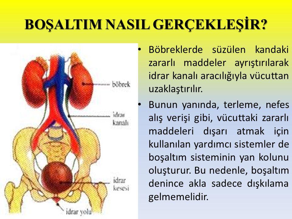 BOŞALTIM SİSTEMİ ORGANLARI NELERDİR.