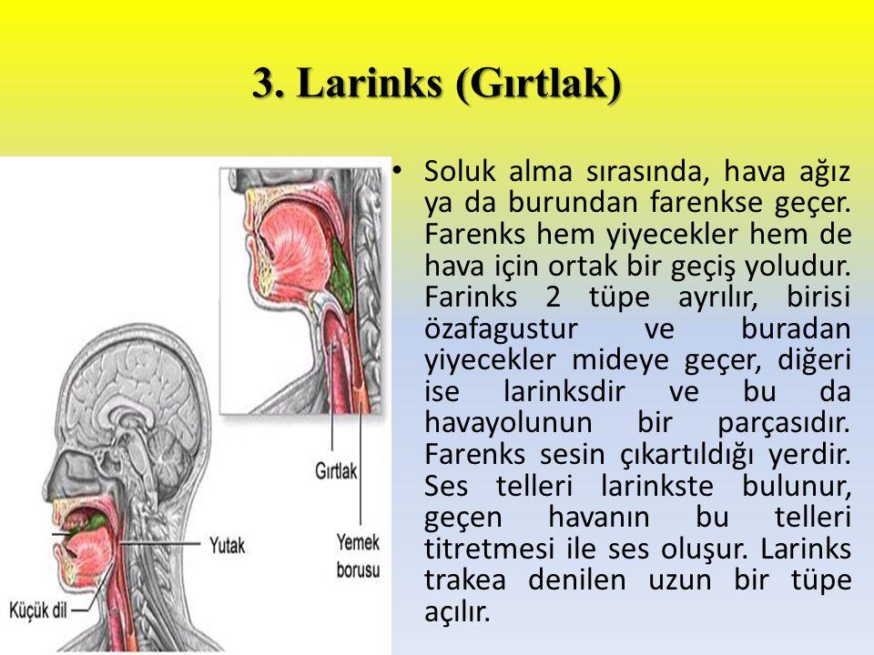 3. Larinks (Gırtlak) Soluk alma sırasında, hava ağız ya da burundan farenkse geçer. Farenks hem yiyecekler hem de hava için ortak bir geçiş yoludur. F