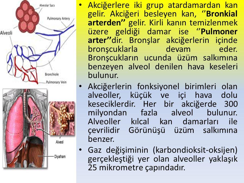 Akciğerlere iki grup atardamardan kan gelir. Akciğeri besleyen kan, ''Bronkial arterden'' gelir. Kirli kanın temizlenmek üzere geldiği damar ise ''Pul