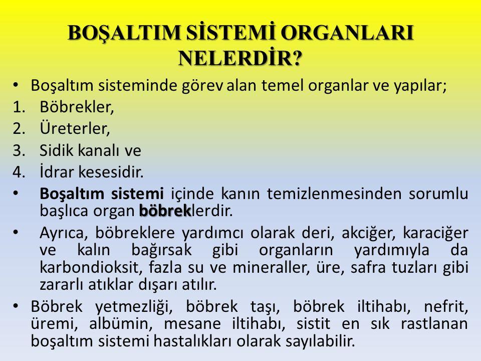 BOŞALTIM SİSTEMİ ORGANLARI NELERDİR? Boşaltım sisteminde görev alan temel organlar ve yapılar; 1.Böbrekler, 2.Üreterler, 3.Sidik kanalı ve 4.İdrar kes