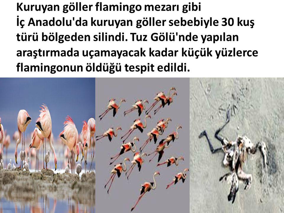 Kuruyan göller flamingo mezarı gibi İç Anadolu'da kuruyan göller sebebiyle 30 kuş türü bölgeden silindi. Tuz Gölü'nde yapılan araştırmada uçamayacak k
