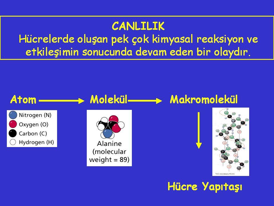 BİYOMOLEKÜLLERİ OLUŞTURAN TEMEL ELEMENTLER C H O N Bunlar biyoelementlerin % 99 unu oluştururlar.