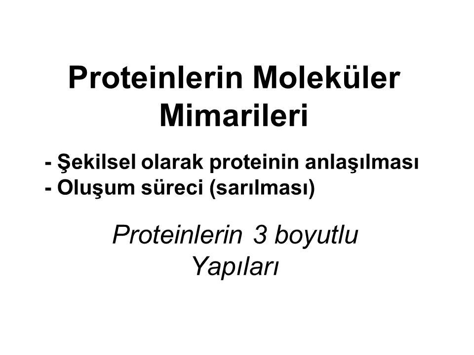 Proteinlerin Moleküler Mimarileri Proteinlerin 3 boyutlu Yapıları - Şekilsel olarak proteinin anlaşılması - Oluşum süreci (sarılması)