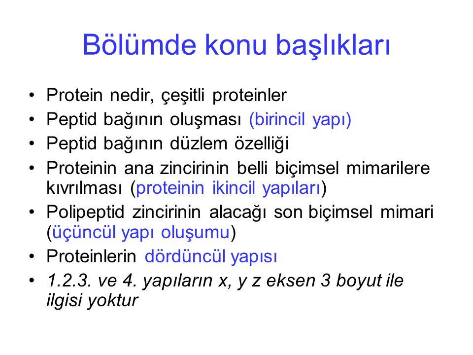 Oligomerik Proteinler İki aynı monomer (dimer) Membran proteini