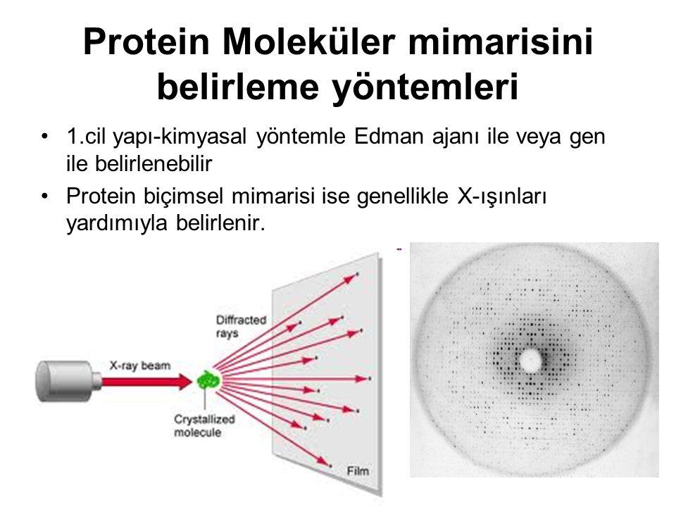 Protein Moleküler mimarisini belirleme yöntemleri 1.cil yapı-kimyasal yöntemle Edman ajanı ile veya gen ile belirlenebilir Protein biçimsel mimarisi ise genellikle X-ışınları yardımıyla belirlenir.