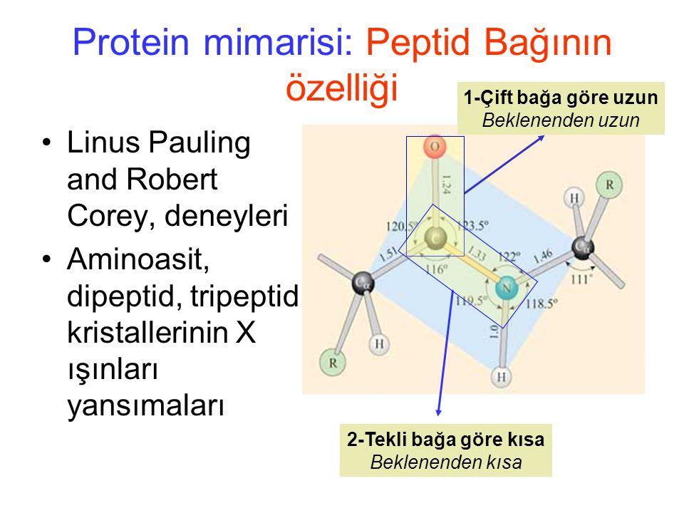 Protein mimarisi: Peptid Bağının özelliği Linus Pauling and Robert Corey, deneyleri Aminoasit, dipeptid, tripeptid kristallerinin X ışınları yansımaları 1-Çift bağa göre uzun Beklenenden uzun 2-Tekli bağa göre kısa Beklenenden kısa