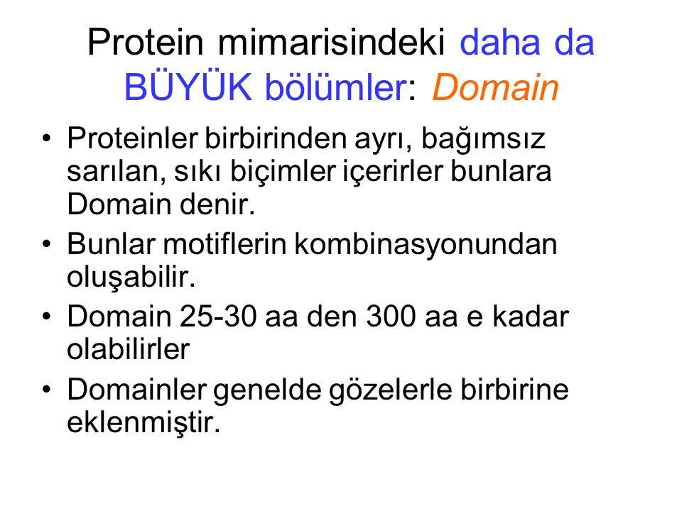 Proteinler birbirinden ayrı, bağımsız sarılan, sıkı biçimler içerirler bunlara Domain denir. Bunlar motiflerin kombinasyonundan oluşabilir. Domain 25-