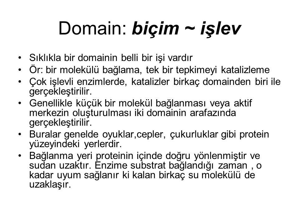 Domain: biçim ~ işlev Sıklıkla bir domainin belli bir işi vardır Ör: bir molekülü bağlama, tek bir tepkimeyi katalizleme Çok işlevli enzimlerde, katalizler birkaç domainden biri ile gerçekleştirilir.