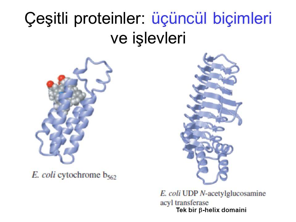 Tek bir  -helix domaini