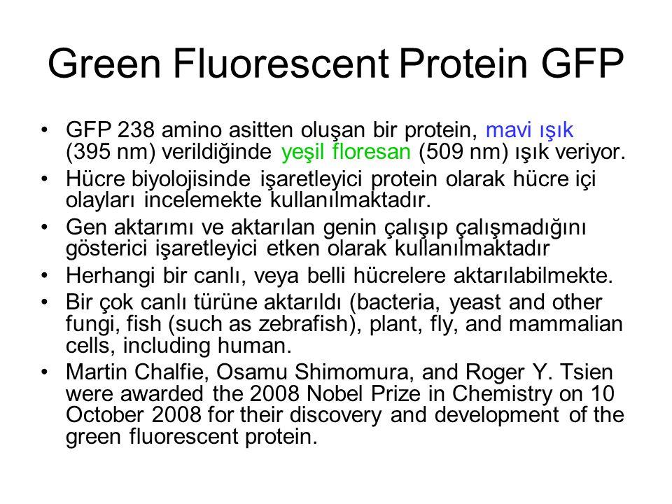 Green Fluorescent Protein GFP GFP 238 amino asitten oluşan bir protein, mavi ışık (395 nm) verildiğinde yeşil floresan (509 nm) ışık veriyor.