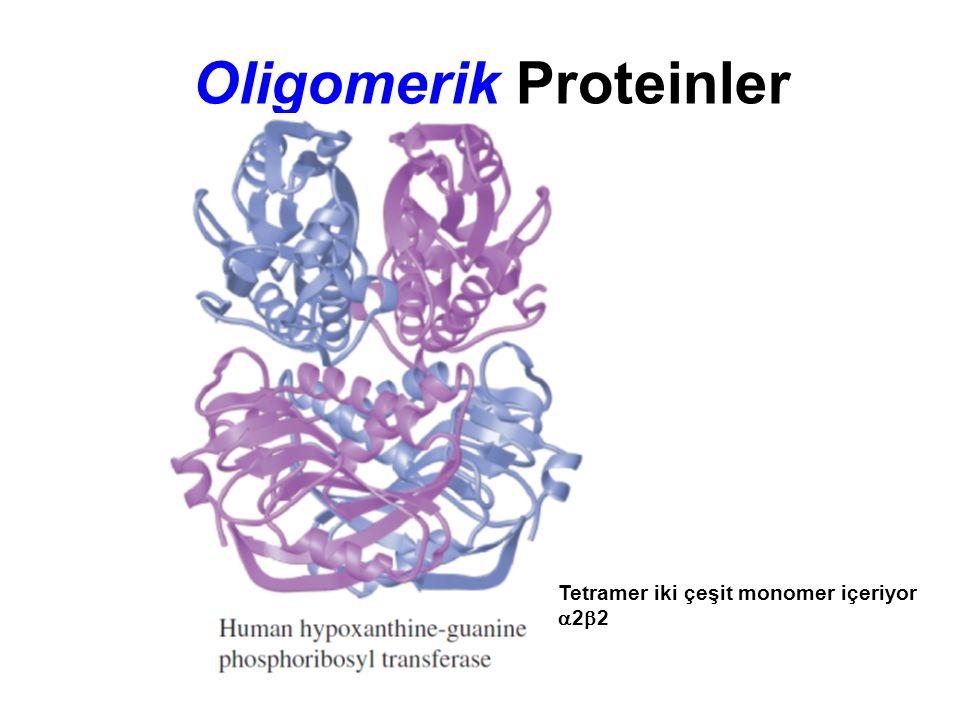 Oligomerik Proteinler Tetramer iki çeşit monomer içeriyor  2  2
