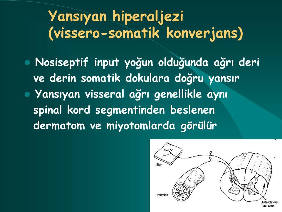 Nosiseptif input yoğun olduğunda ağrı deri ve derin somatik dokulara doğru yansır Yansıyan visseral ağrı genellikle aynı spinal kord segmentinden besl
