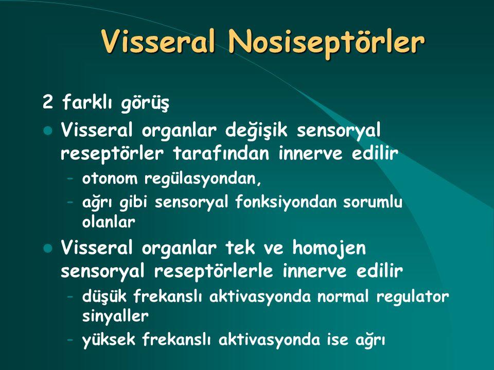 Yüksek eşik değerli reseptörler Yoğunluk şifreli reseptörler Sessiz reseptörler Visseral Nosiseptörler