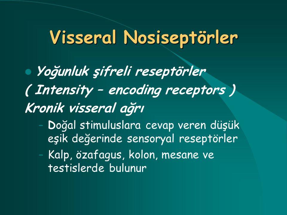 Yoğunluk şifreli reseptörler ( Intensity – encoding receptors ) Kronik visseral ağrı – Doğal stimuluslara cevap veren düşük eşik değerinde sensoryal r