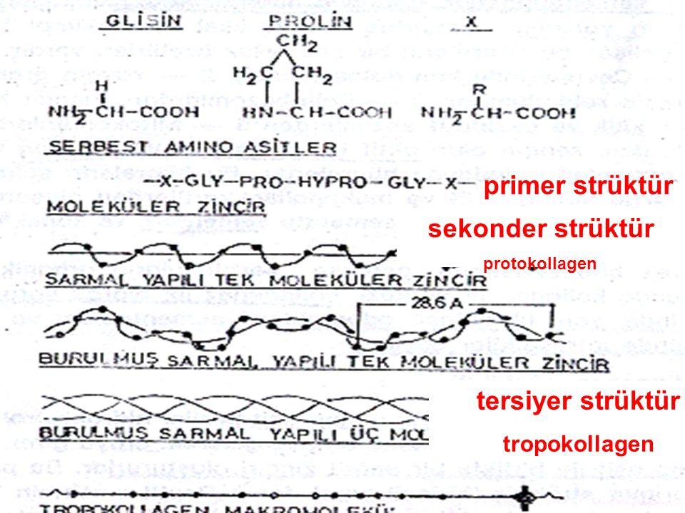 primer strüktür sekonder strüktür protokollagen tersiyer strüktür tropokollagen