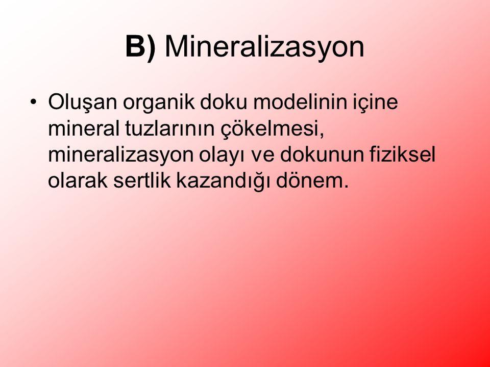 B) Mineralizasyon Oluşan organik doku modelinin içine mineral tuzlarının çökelmesi, mineralizasyon olayı ve dokunun fiziksel olarak sertlik kazandığı dönem.