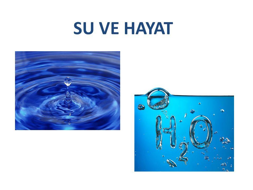 Su, canlı hayatının temel ihtiyaçlarındandır.