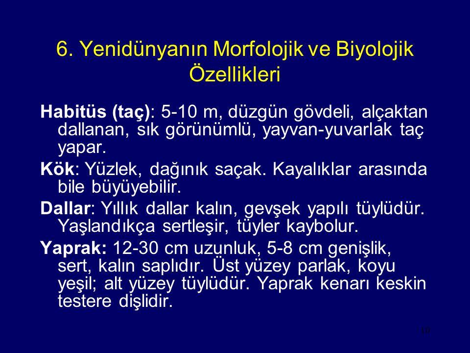 10 6. Yenidünyanın Morfolojik ve Biyolojik Özellikleri Habitüs (taç): 5-10 m, düzgün gövdeli, alçaktan dallanan, sık görünümlü, yayvan-yuvarlak taç ya