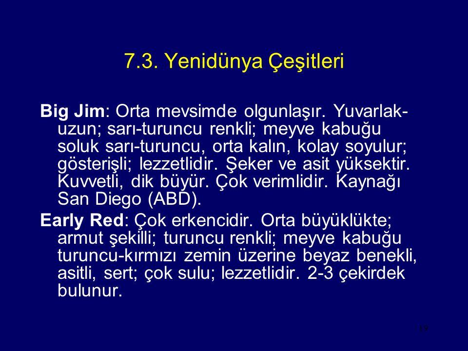 19 7.3. Yenidünya Çeşitleri Big Jim: Orta mevsimde olgunlaşır. Yuvarlak- uzun; sarı-turuncu renkli; meyve kabuğu soluk sarı-turuncu, orta kalın, kolay