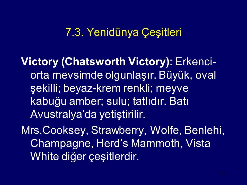 21 7.3. Yenidünya Çeşitleri Victory (Chatsworth Victory): Erkenci- orta mevsimde olgunlaşır. Büyük, oval şekilli; beyaz-krem renkli; meyve kabuğu ambe