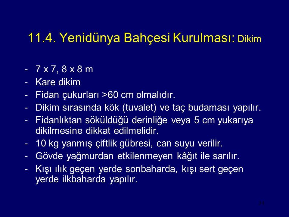 34 11.4. Yenidünya Bahçesi Kurulması: Dikim -7 x 7, 8 x 8 m -Kare dikim -Fidan çukurları >60 cm olmalıdır. -Dikim sırasında kök (tuvalet) ve taç budam
