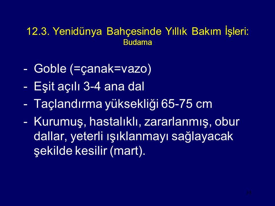 38 12.3. Yenidünya Bahçesinde Yıllık Bakım İşleri: Budama -Goble (=çanak=vazo) -Eşit açılı 3-4 ana dal -Taçlandırma yüksekliği 65-75 cm -Kurumuş, hast