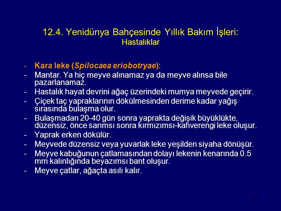 39 12.4. Yenidünya Bahçesinde Yıllık Bakım İşleri: Hastalıklar -Kara leke (Spilocaea eriobotryae): -Mantar. Ya hiç meyve alınamaz ya da meyve alınsa b