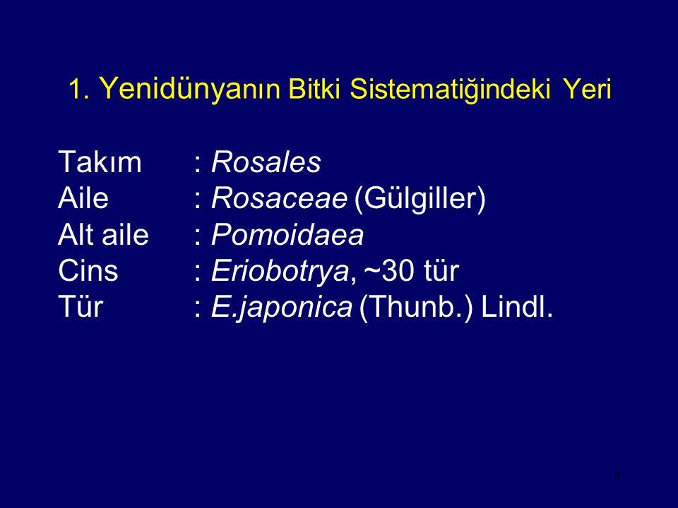 4 1. Yenidünya nın Bitki Sistematiğindeki Yeri Takım: Rosales Aile: Rosaceae (Gülgiller) Alt aile: Pomoidaea Cins: Eriobotrya, ~30 tür Tür: E.japonica