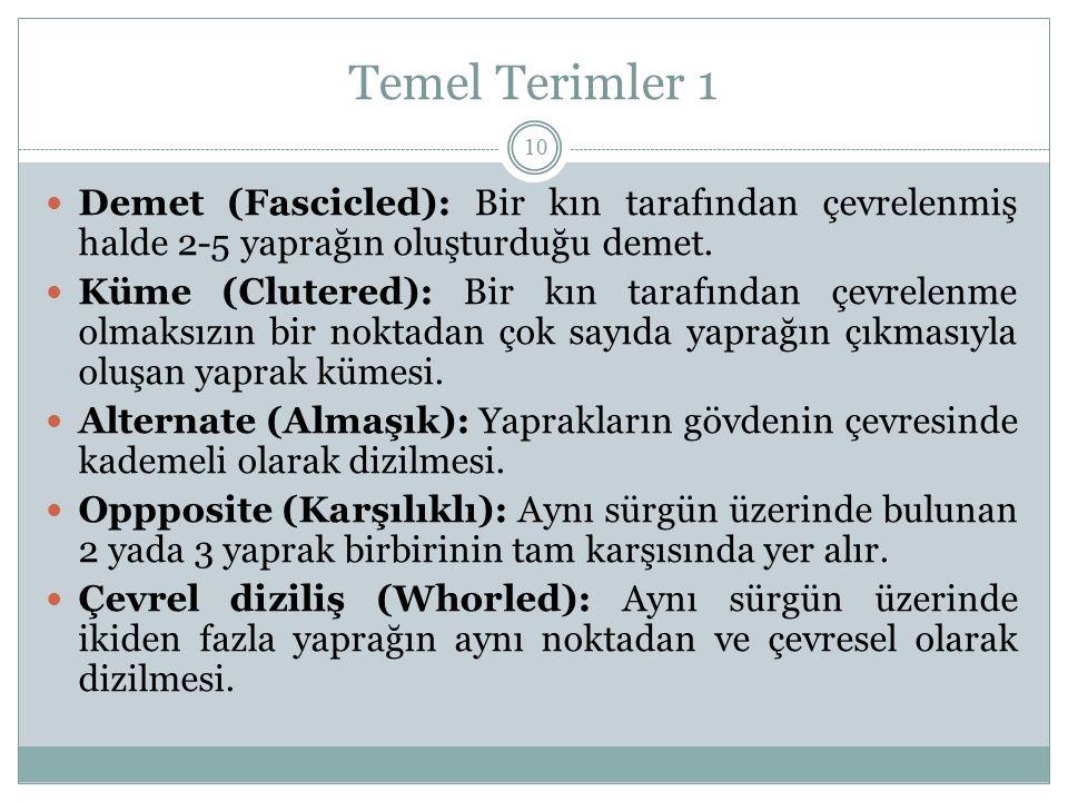 Temel Terimler 1 Demet (Fascicled): Bir kın tarafından çevrelenmiş halde 2-5 yaprağın oluşturduğu demet. Küme (Clutered): Bir kın tarafından çevrelenm