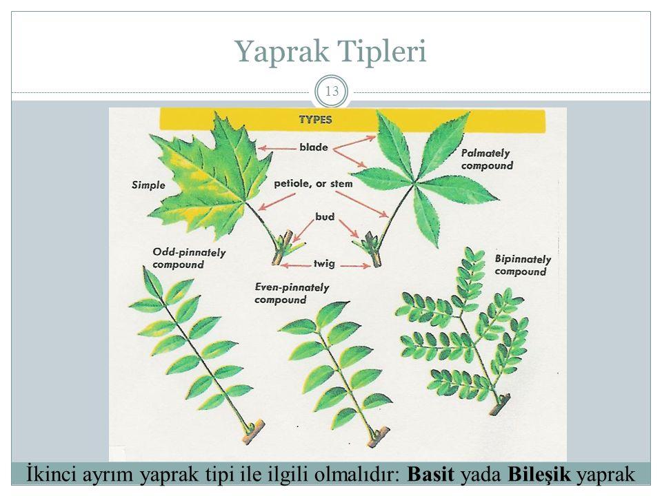Yaprak Tipleri 13 İkinci ayrım yaprak tipi ile ilgili olmalıdır: Basit yada Bileşik yaprak