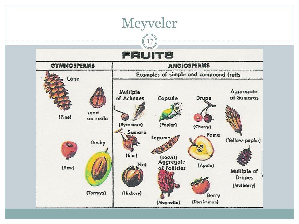 Meyveler 17
