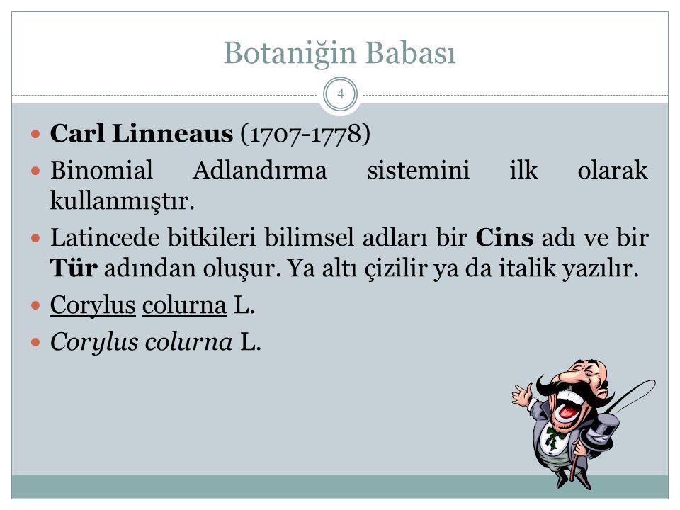 Botaniğin Babası Carl Linneaus (1707-1778) Binomial Adlandırma sistemini ilk olarak kullanmıştır. Latincede bitkileri bilimsel adları bir Cins adı ve