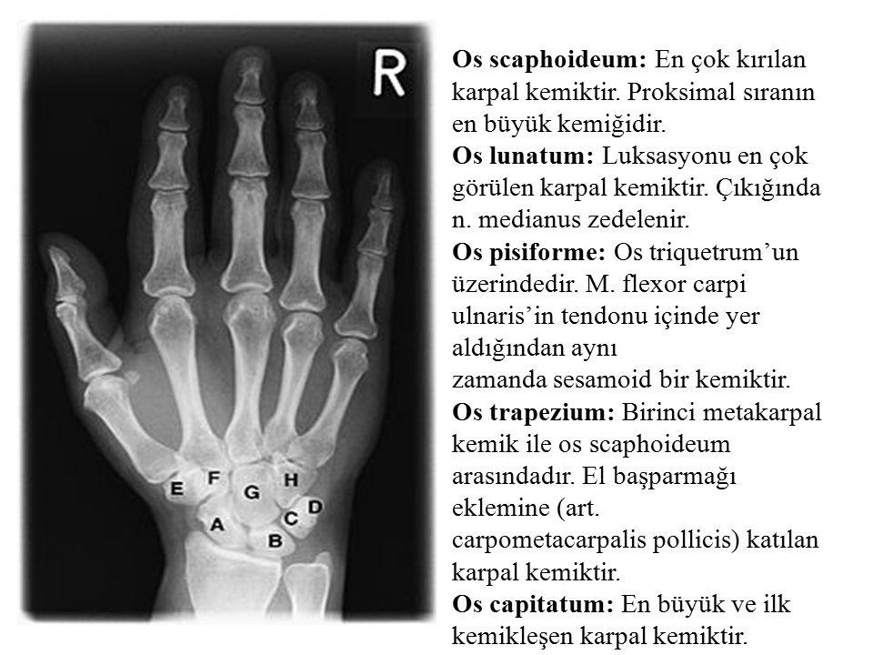 Os scaphoideum: En çok kırılan karpal kemiktir. Proksimal sıranın en büyük kemiğidir. Os lunatum: Luksasyonu en çok görülen karpal kemiktir. Çıkığında