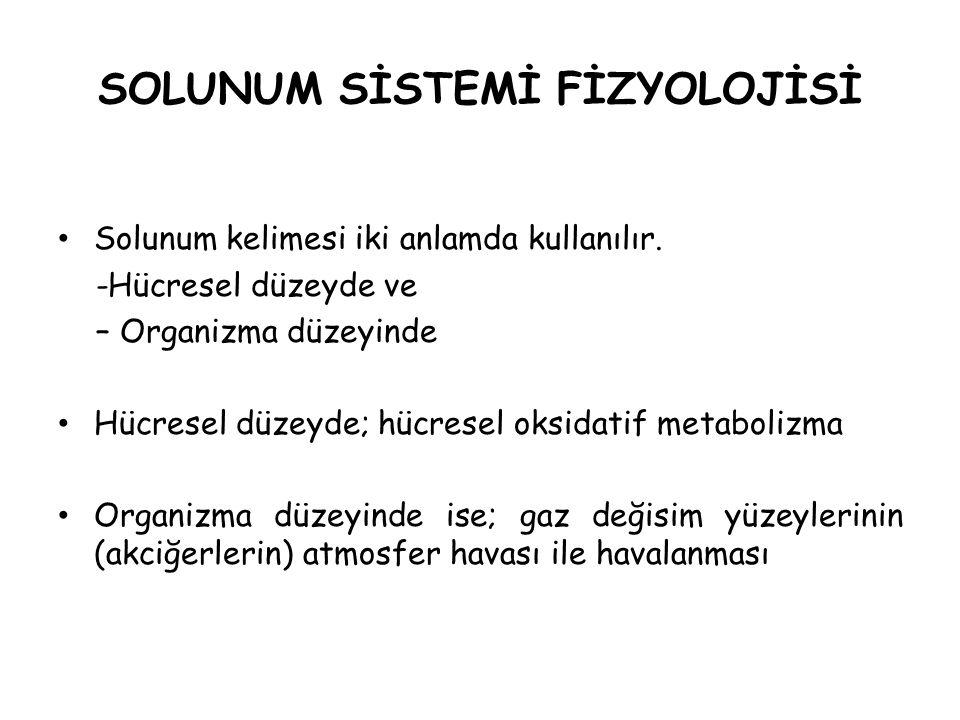 Solunum Sisteminin Fonksiyonları Oksijen temin eder.
