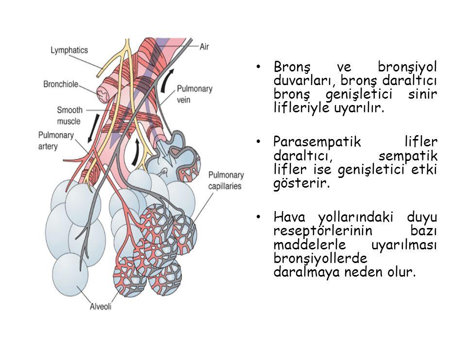 Bronş ve bronşiyol duvarları, bronş daraltıcı bronş genişletici sinir lifleriyle uyarılır. Parasempatik lifler daraltıcı, sempatik lifler ise genişlet