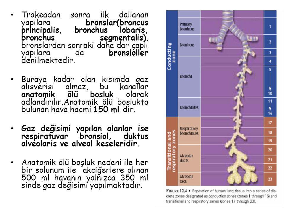 Akciğer Ventilasyonu(VE) Bir dakikada solunum sistemine giren veya çıkan hava hacmi olarak tanımlanır.