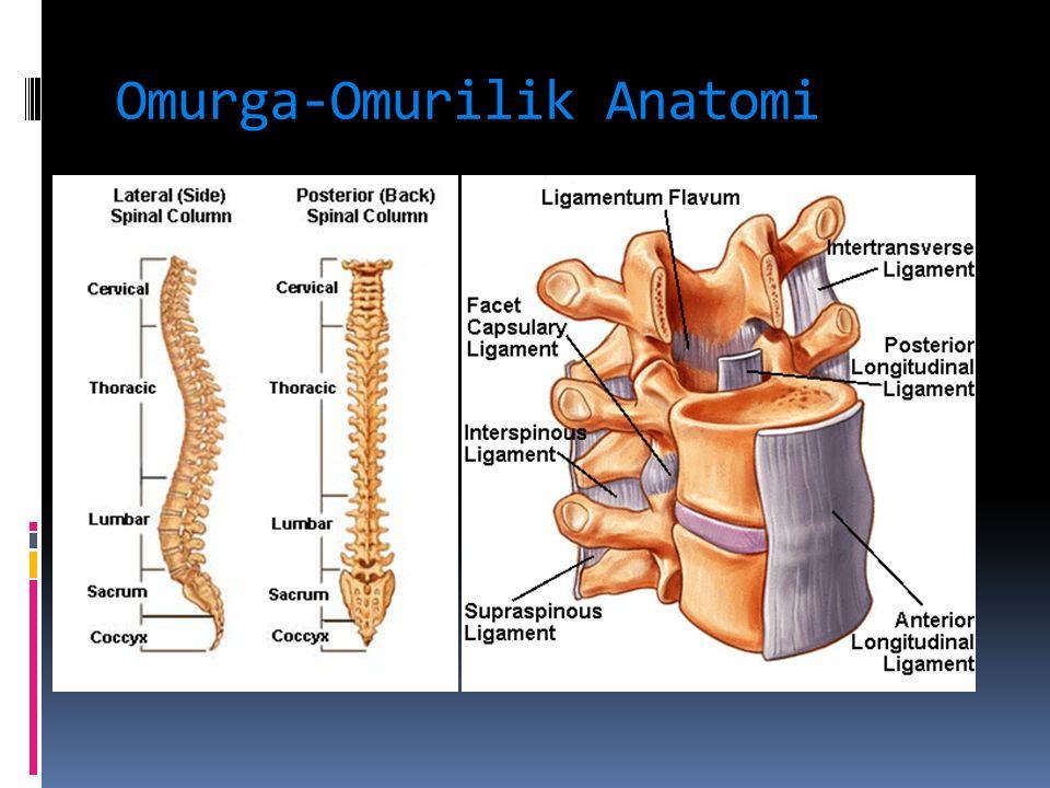 Metastatik tümörler  Vertebralar en sık metastaz alan kemiklerdir.