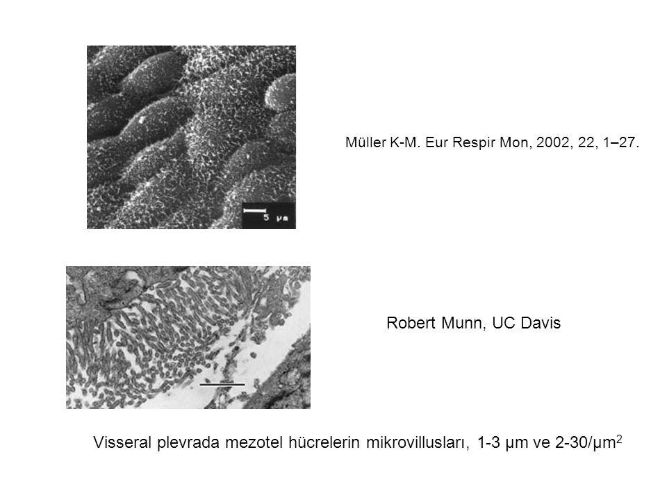 Mezotel hücrelerin fonksiyonları Bariyer fonksiyonu –Siyalomüsin tabaka anyonik yük –İnflamatuvar hücreler Salgılama –Alttaki bağ dokusu tabakanın makromolekülleri –Sitokinler, kemotaktik peptidler, büyüme faktörleri –Hyalüronik asit –Fibronektin RNA ve glikojen depoları Transselüler transportta aktif rol