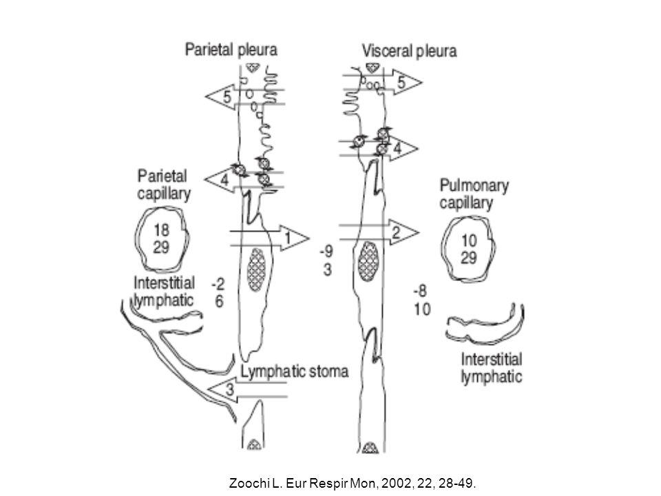 Plevral kapillerler / plevral boşluk +30 35 6 29 +34 +24 29 0 29 +34 -5 +5 Hidrostatik basınç Onkotik basınç Pariyetal plevraVisseral plevra Light KW.