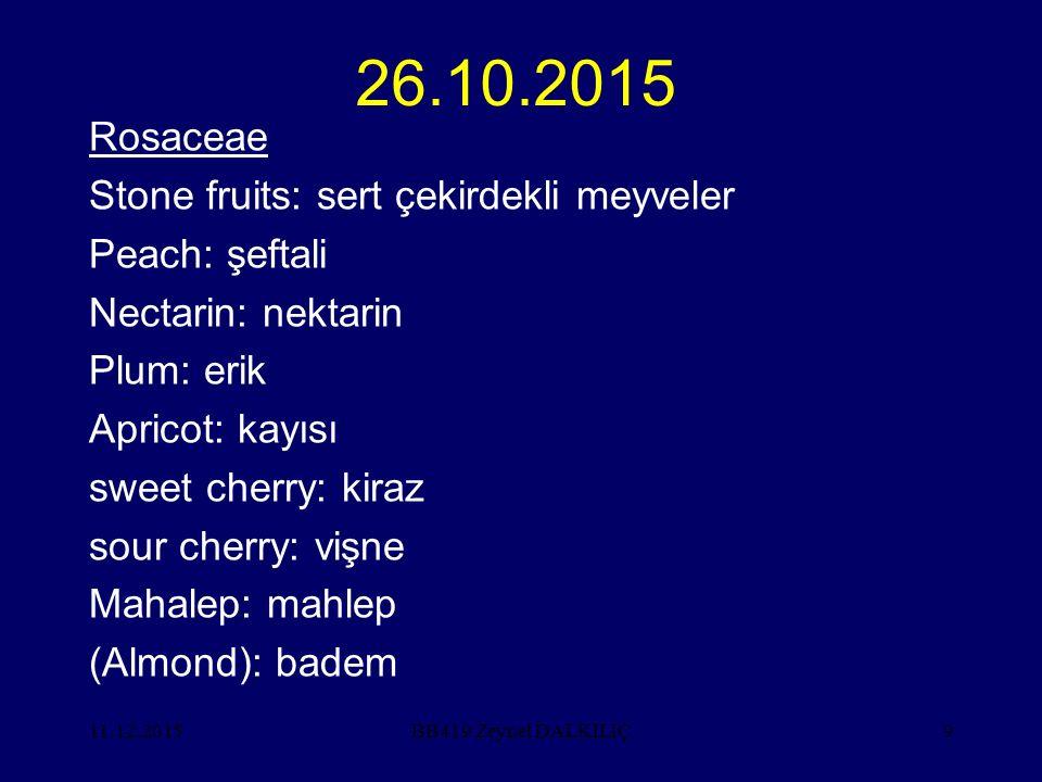 11.12.20159 26.10.2015 Rosaceae Stone fruits: sert çekirdekli meyveler Peach: şeftali Nectarin: nektarin Plum: erik Apricot: kayısı sweet cherry: kira