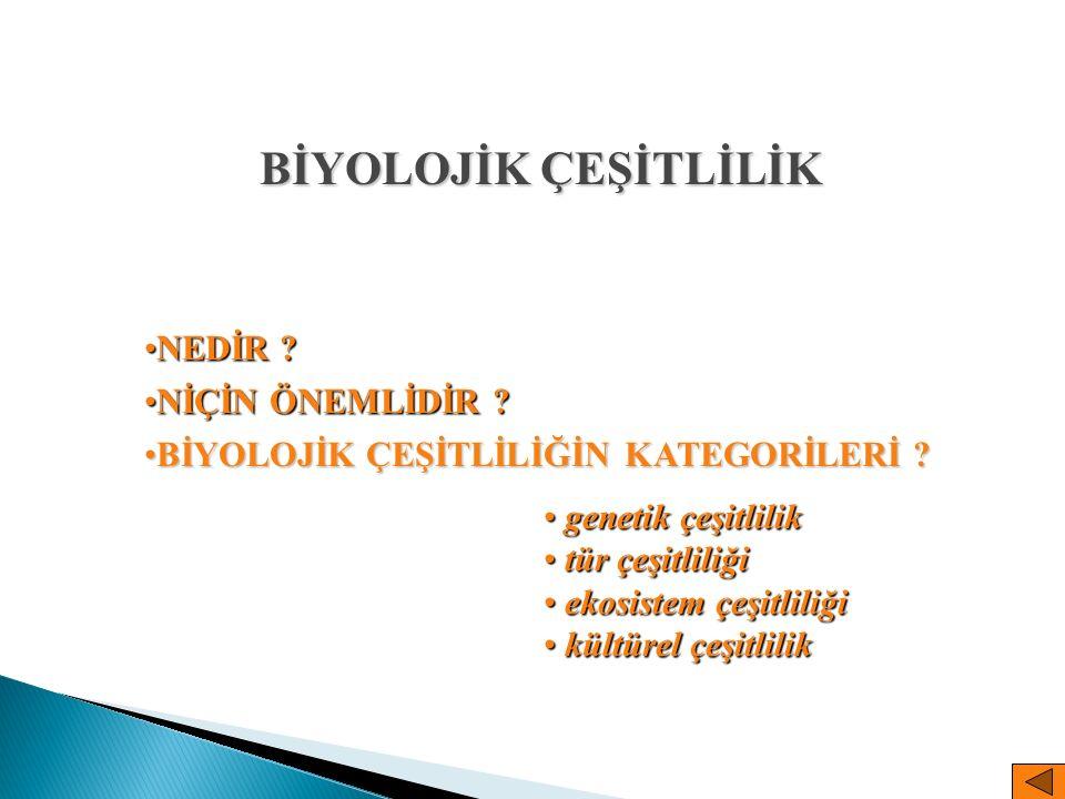  Endoparazitoid  Ektoparazitoid